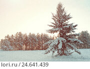 Winter landscape - fir tree covered with snow in the winter forest under falling snow in cold weather, фото № 24641439, снято 27 ноября 2010 г. (c) Зезелина Марина / Фотобанк Лори