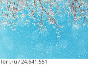 Купить «Winter landscape - snowy branches of the winter tree on the background of the sunny sky under snowfall», фото № 24641551, снято 9 января 2016 г. (c) Зезелина Марина / Фотобанк Лори