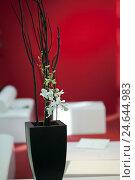 Купить «Flower arrangement in front of living-room furniture,», фото № 24644983, снято 15 августа 2011 г. (c) mauritius images / Фотобанк Лори