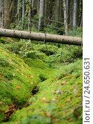 Trunk, moss, lie, scenery, wood, the Bavarian Forest,, фото № 24650631, снято 26 марта 2017 г. (c) mauritius images / Фотобанк Лори