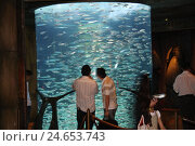 Купить «United Arab Emirates, Dubai, The Palm, hotel Atlantis, aquarium, hotel guests, town, destination, place of interest, tourism, luxury, five-star hotel,...», фото № 24653743, снято 7 января 2009 г. (c) mauritius images / Фотобанк Лори