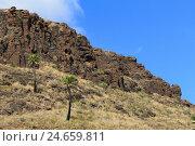 Купить «Canary islands, grain Canaria, volcano scenery, scenery, nature, landscape format, Spain, palms, sunshine, heaven, blue, volcano rock, rock, Spain,», фото № 24659811, снято 15 ноября 2011 г. (c) mauritius images / Фотобанк Лори