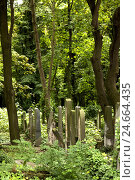 Купить «Historical, cemetery, gravestone, Judaism, Berlin,», фото № 24664435, снято 20 августа 2018 г. (c) mauritius images / Фотобанк Лори