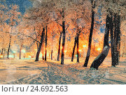Купить «Winter night park landscape with falling snowflakes», фото № 24692563, снято 20 ноября 2019 г. (c) Зезелина Марина / Фотобанк Лори