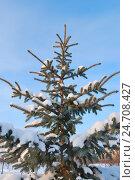 Купить «Стройная елочка в солнечный зимний день», фото № 24708427, снято 3 января 2010 г. (c) Татьяна Савватеева / Фотобанк Лори