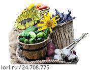 Купить «Дачный урожай в мешке и корзинах - томаты, огурцы, чеснок, фасоль и картофель», фото № 24708775, снято 28 августа 2016 г. (c) Валерий Тырин / Фотобанк Лори