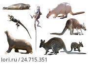Купить «australia animals isolated», фото № 24715351, снято 7 декабря 2019 г. (c) Яков Филимонов / Фотобанк Лори
