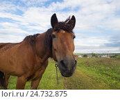 Портрет лошади на лугу. Стоковое фото, фотограф Сергей Макаров / Фотобанк Лори