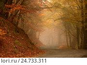 Купить «Осень», фото № 24733311, снято 24 октября 2016 г. (c) Яна Королёва / Фотобанк Лори