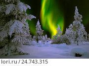 Купить «Зимний ночной пейзаж с северным сиянием и ночным лесом», фото № 24743315, снято 12 декабря 2015 г. (c) Оксана Владимировна Грачева / Фотобанк Лори