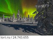 Купить «Зимний ночной пейзаж с северным сиянием и ночным лесом», фото № 24743655, снято 12 декабря 2015 г. (c) Оксана Владимировна Грачева / Фотобанк Лори