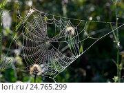 Купить «Паутинка в лесу», фото № 24765299, снято 9 марта 2014 г. (c) Игорь Потапов / Фотобанк Лори
