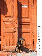 Собака как бесплатная охрана подъезда (2013 год). Стоковое фото, фотограф Борис Сунцов / Фотобанк Лори