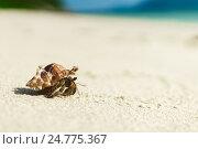 Купить «Краб на песке», фото № 24775367, снято 8 декабря 2016 г. (c) Галаганов Дмитрий Александрович / Фотобанк Лори