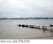 Купить «Чайки сидят на деревянных мостках», фото № 24776015, снято 13 сентября 2011 г. (c) Светлана Кириллова / Фотобанк Лори