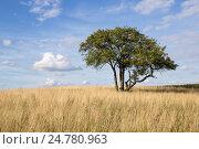 Одинокое дерево. Стоковое фото, фотограф Глыцко Андрей / Фотобанк Лори