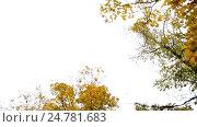 Купить «autumn forest with different trees over sky», видеоролик № 24781683, снято 13 октября 2016 г. (c) Syda Productions / Фотобанк Лори