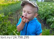 Купить «Ребёнок разглядывает ягоду на фоне садового участка», фото № 24798295, снято 20 июля 2016 г. (c) Кауц Яков / Фотобанк Лори