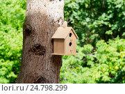 Скворечник на дереве. Стоковое фото, фотограф Александр Щепин / Фотобанк Лори