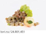 Grapes. Стоковое фото, фотограф Igor Sirbu / Фотобанк Лори