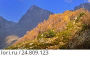 Купить «Осеннее дерево в горах Кавказа», фото № 24809123, снято 7 октября 2016 г. (c) александр жарников / Фотобанк Лори