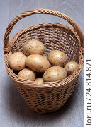 Купить «Клубни сырого картофеля в плетеной корзине на деревянном фоне», эксклюзивное фото № 24814871, снято 5 января 2017 г. (c) Яна Королёва / Фотобанк Лори