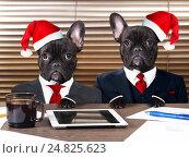 Купить «Две собаки в костюмах сидят за столом с планшетом и документами», фото № 24825623, снято 18 июня 2019 г. (c) Ирина Козорог / Фотобанк Лори