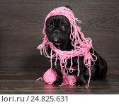 Купить «Собака запуталась в розовой пряже», фото № 24825631, снято 18 июня 2019 г. (c) Ирина Козорог / Фотобанк Лори