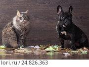 Купить «Собака и кот сидят на полу в окружении рваной бумаги и виновато смотрят в камеру», фото № 24826363, снято 27 марта 2019 г. (c) Ирина Козорог / Фотобанк Лори