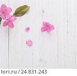 Купить «apple flowers on wooden background», фото № 24831243, снято 10 мая 2016 г. (c) Майя Крученкова / Фотобанк Лори