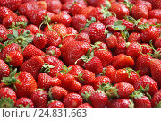Купить «Organic strawberry. Top view, High resolution product. Harvest concept», фото № 24831663, снято 31 мая 2016 г. (c) Роман Егошин / Фотобанк Лори