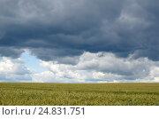 Купить «Летний пейзаж с грозовыми облаками над полем злаковых», эксклюзивное фото № 24831751, снято 9 июля 2016 г. (c) Елена Коромыслова / Фотобанк Лори