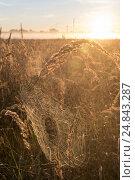 Купить «Berlin, Germany, spider web in the morning sun», фото № 24843287, снято 7 сентября 2016 г. (c) Caro Photoagency / Фотобанк Лори