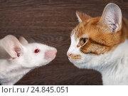 Купить «Cat and mouse. The animal profiles, muzzle closeup», фото № 24845051, снято 14 ноября 2019 г. (c) Ирина Козорог / Фотобанк Лори