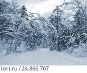 Заснеженные деревья. Стоковое фото, фотограф Римма Тельнова / Фотобанк Лори