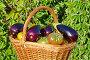 Корзина с баклажанами и помидорами на улице, фото № 24869027, снято 28 августа 2016 г. (c) Елена Коромыслова / Фотобанк Лори