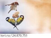 Птицы синицы и воробей сидят на кормушке и поедают семена. Стоковое фото, фотограф Бачкова Наталья / Фотобанк Лори