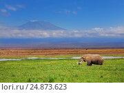 Купить «African elephant with Kilimanjaro in background», фото № 24873623, снято 16 августа 2015 г. (c) Сергей Новиков / Фотобанк Лори