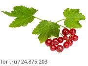 Гроздь ягод красной смородины на белом фоне изолировано, фото № 24875203, снято 3 августа 2015 г. (c) Наталья Волкова / Фотобанк Лори