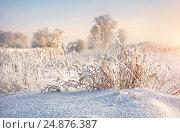 Купить «Snow frost on the curly grass and trees», фото № 24876387, снято 20 января 2013 г. (c) Baturina Yuliya / Фотобанк Лори