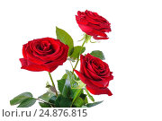 Букет красных роз на белом фоне. Стоковое фото, фотограф Лариса К / Фотобанк Лори