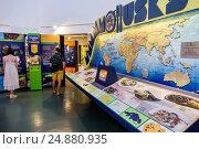 Florida, Sanibel Island, Bailey-Matthews National Shell Museum, exhibits, interior, (2016 год). Редакционное фото, фотограф Jeff Greenberg / age Fotostock / Фотобанк Лори