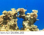 Underwaterscape. Стоковое фото, фотограф М / Фотобанк Лори