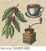 A branch of coffee, vintage coffee grinder and a cup of coffee. Hand drawn engraving style. Vector illustration. Стоковая иллюстрация, иллюстратор Станислав Хомутовский / Фотобанк Лори
