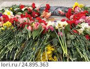 Купить «Цветы у подножия мемориала 1200 гвардейцам. Калининград», эксклюзивное фото № 24895363, снято 9 апреля 2008 г. (c) Ирина Борсученко / Фотобанк Лори