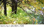 Купить «Detail of autumn park on a sunny day», видеоролик № 24901739, снято 18 января 2017 г. (c) Володина Ольга / Фотобанк Лори