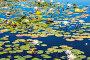 Белыей лотосы в пруду, фото № 24920679, снято 2 ноября 2016 г. (c) Наталья Волкова / Фотобанк Лори