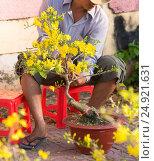 Купить «Seller of apricot trees, Vietnam», фото № 24921631, снято 6 февраля 2016 г. (c) Александр Подшивалов / Фотобанк Лори