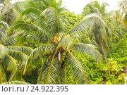 Palm trees and Sky (2016 год). Стоковое фото, фотограф Александр Бекишев / Фотобанк Лори