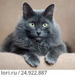 Кошачий взгляд. Стоковое фото, фотограф Анна Алексеева / Фотобанк Лори